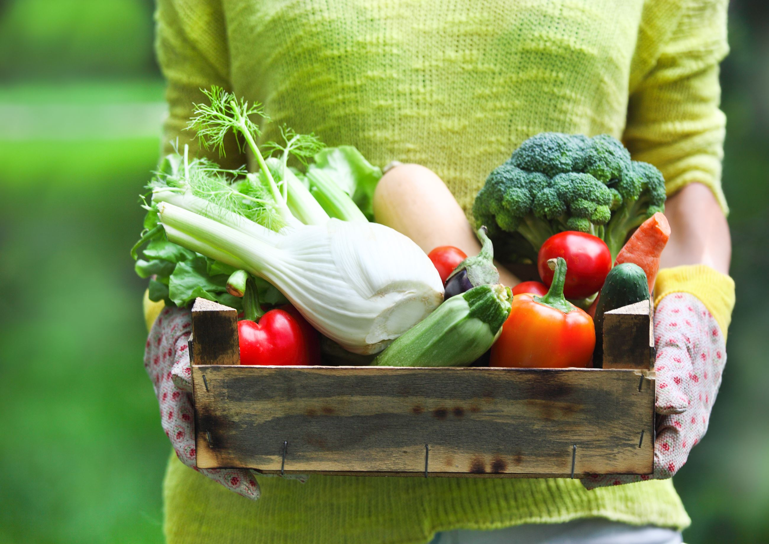 Woman wearing gloves with fresh vegetables in the box in her hands. Close up